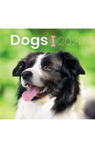 Kalender 2020 Baccara 18x18 Dogs