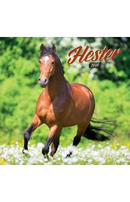 Kalender 2020 Baccara 18x18 Hester
