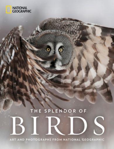 The Splendor of Birds