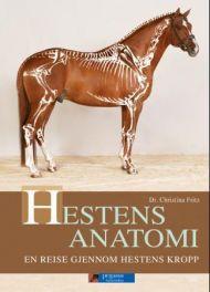 Hestens anatomi