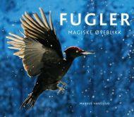 Fugler - magiske øyeblikk