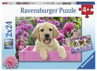 Puslespill 2X24 Hundevalper Ravensburger