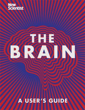 The Brain. Everything You Need to Know