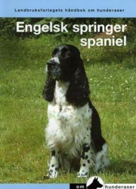Engelsk springer spaniel